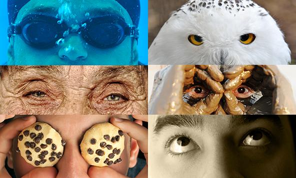 Diverse Vision = Better Voice